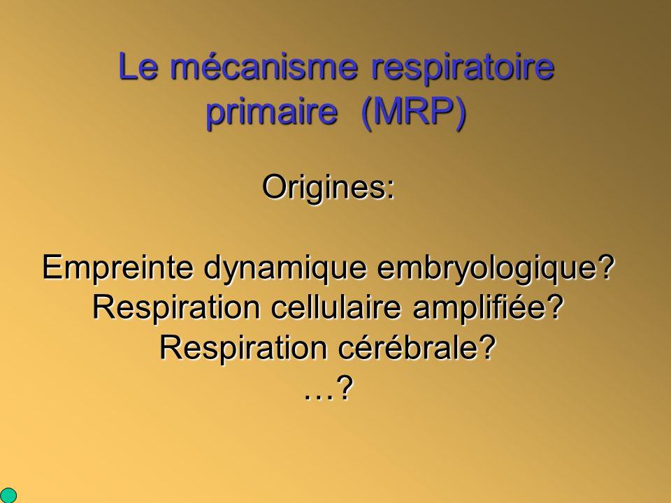 Le mécanisme respiratoire primaire (MRP)