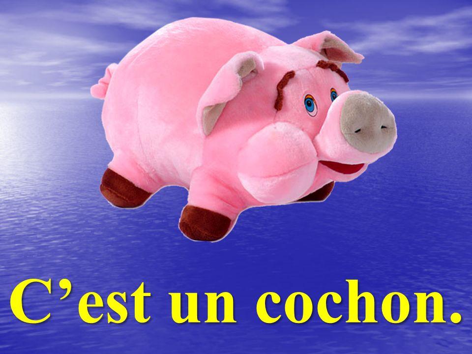 C'est un cochon.