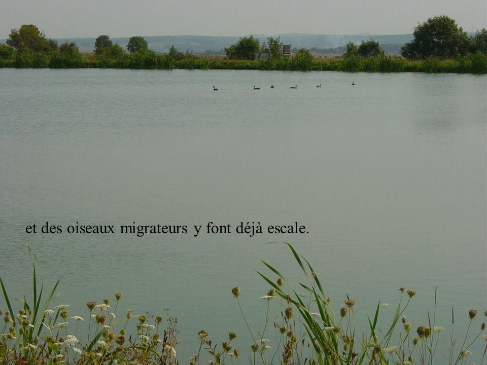 et des oiseaux migrateurs y font déjà escale.