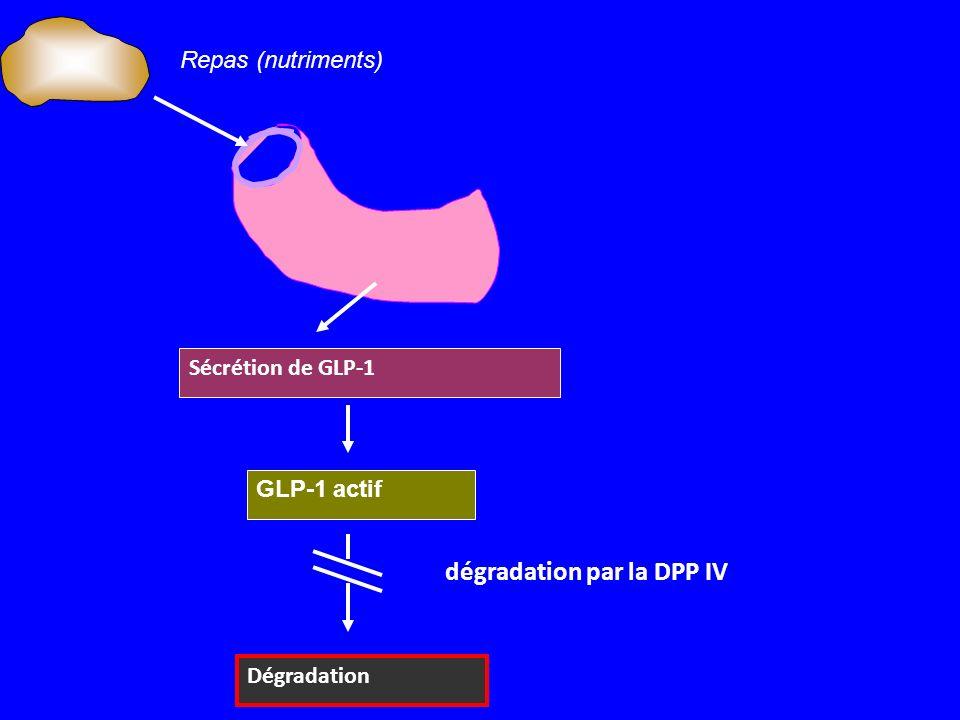 dégradation par la DPP IV