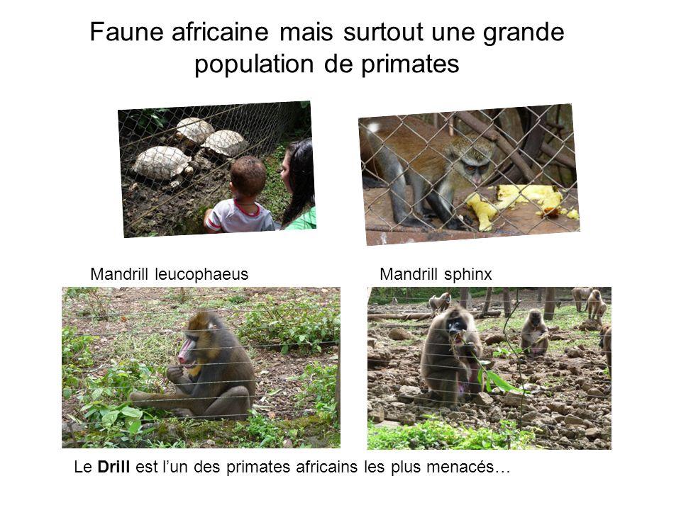 Faune africaine mais surtout une grande population de primates