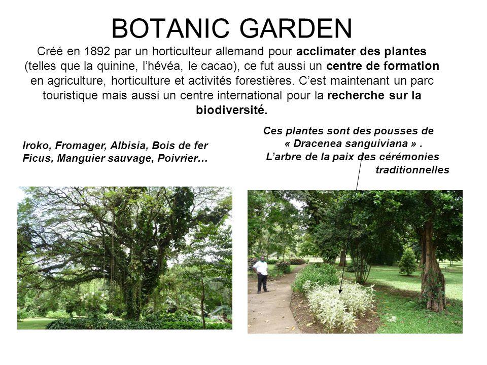 BOTANIC GARDEN Créé en 1892 par un horticulteur allemand pour acclimater des plantes (telles que la quinine, l'hévéa, le cacao), ce fut aussi un centre de formation en agriculture, horticulture et activités forestières. C'est maintenant un parc touristique mais aussi un centre international pour la recherche sur la biodiversité.