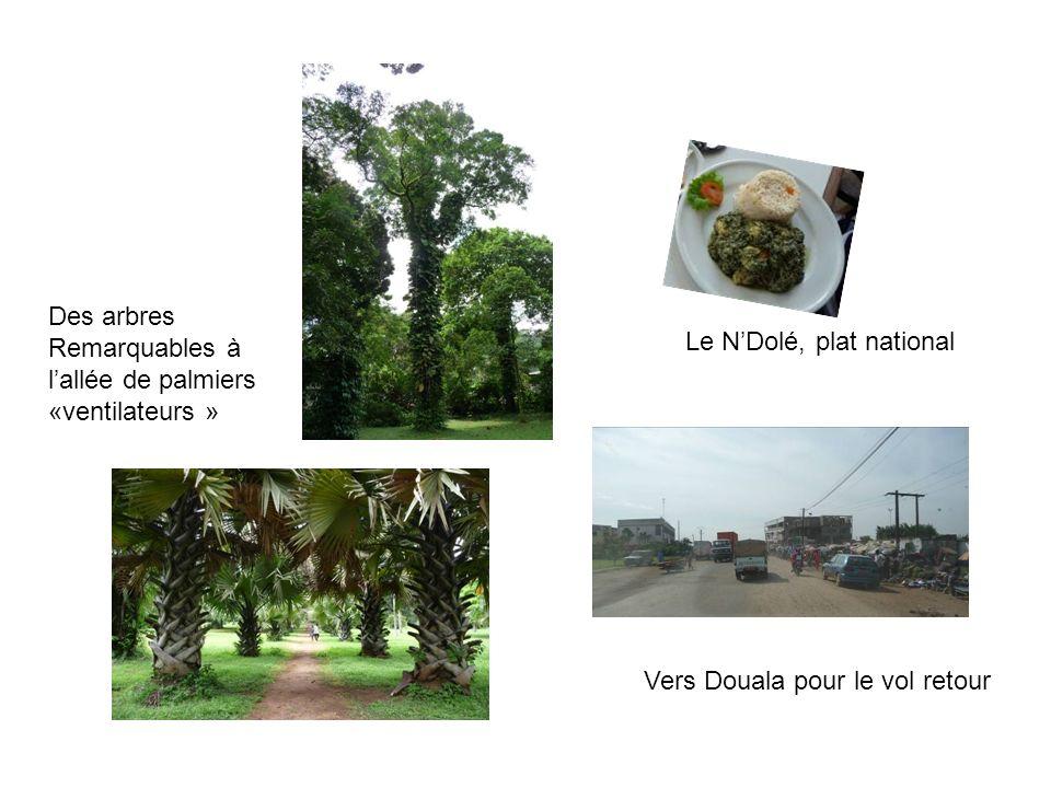 Des arbres Remarquables à. l'allée de palmiers «ventilateurs » Le N'Dolé, plat national.