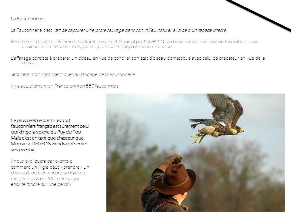 La Fauconnerie : La Fauconnerie c'est l art de capturer une proie sauvage dans son milieu naturel à l aide d un rapace dressé. Récemment classée au Patrimoine culturel immatériel Mondial par l'UNESCO, la chasse dite au haut vol ou bas vol est un art plusieurs fois millénaire. Les égyptiens pratiquaient déjà ce mode de chasse. L'affaitage consiste à préparer un oiseau en vue de concilier son état d'oiseau domestique avec celui de prédateur en vue de la chasse. Sept cent mots sont spécifiques au langage de la Fauconnerie. Il y a actuellement en France environ 550 fauconniers.