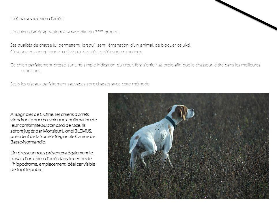 La Chasse au chien d'arrêt : Un chien d'arrêt appartient à la race dite du 7ème groupe. Ses qualités de chasse lui permettent, lorsqu'il sent l'émanation d'un animal, de bloquer celui-ci. C'est un sens exceptionnel cultivé par des siècles d'élevage minutieux. Ce chien parfaitement dressé, sur une simple indication du tireur, fera s'enfuir sa proie afin que le chasseur le tire dans les meilleures conditions. Seuls les oiseaux parfaitement sauvages sont chassés avec cette méthode.