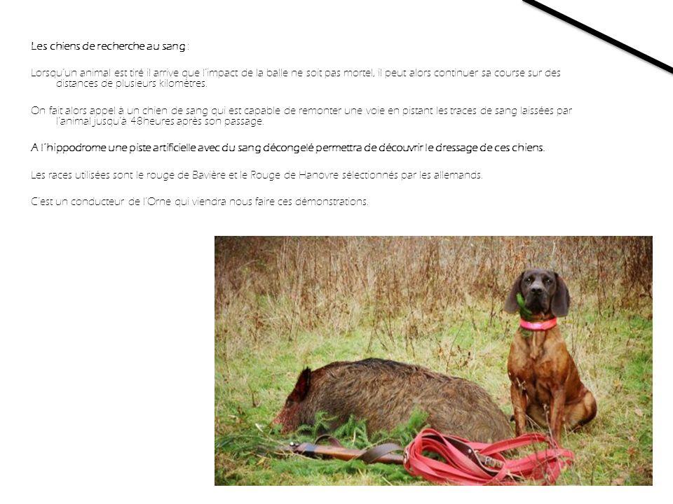 Les chiens de recherche au sang :