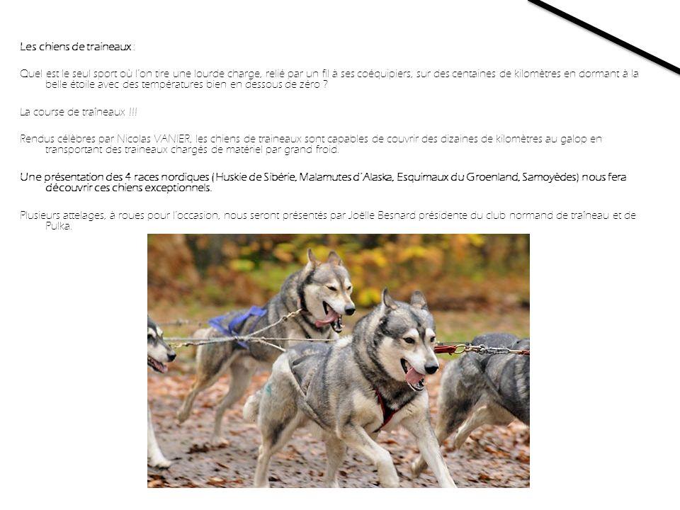 Les chiens de traineaux : Quel est le seul sport où l'on tire une lourde charge, relié par un fil à ses coéquipiers, sur des centaines de kilomètres en dormant à la belle étoile avec des températures bien en dessous de zéro .