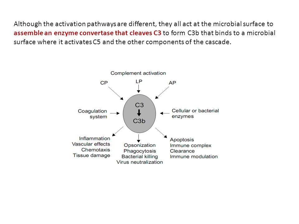 Although the activation pathways are different, they all act at the microbial surface to assemble an enzyme convertase that cleaves C3 to form C3b that binds to a microbial surface where it activates C5 and the other components of the cascade.