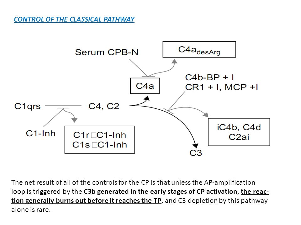 CONTROL OF THE CLASSICAL PATHWAY