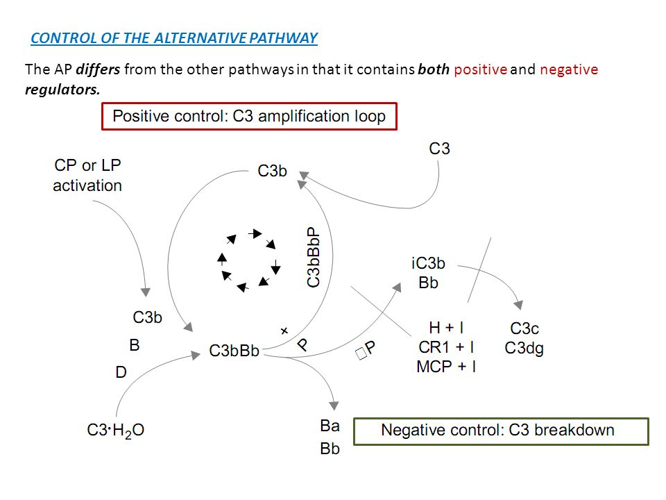 CONTROL OF THE ALTERNATIVE PATHWAY