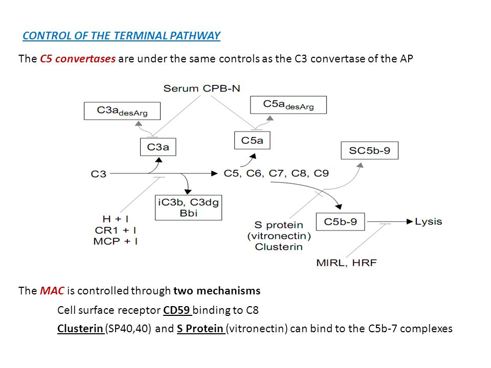 CONTROL OF THE TERMINAL PATHWAY