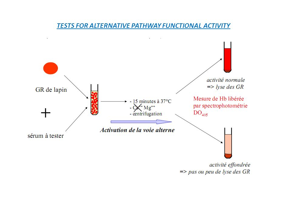 TESTS FOR ALTERNATIVE PATHWAY FUNCTIONAL ACTIVITY