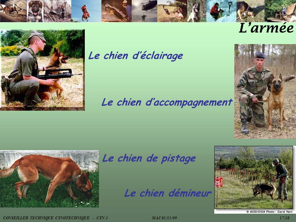 L'armée Le chien d'éclairage Le chien d'accompagnement