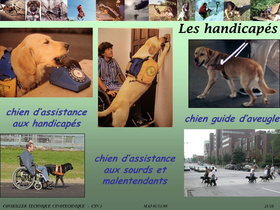 Les handicapés chien d'assistance aux handicapés chien guide d'aveugle