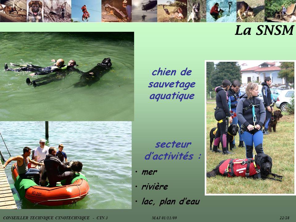 chien de sauvetage aquatique