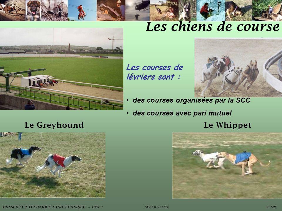 Les chiens de course Les courses de lévriers sont : Le Greyhound