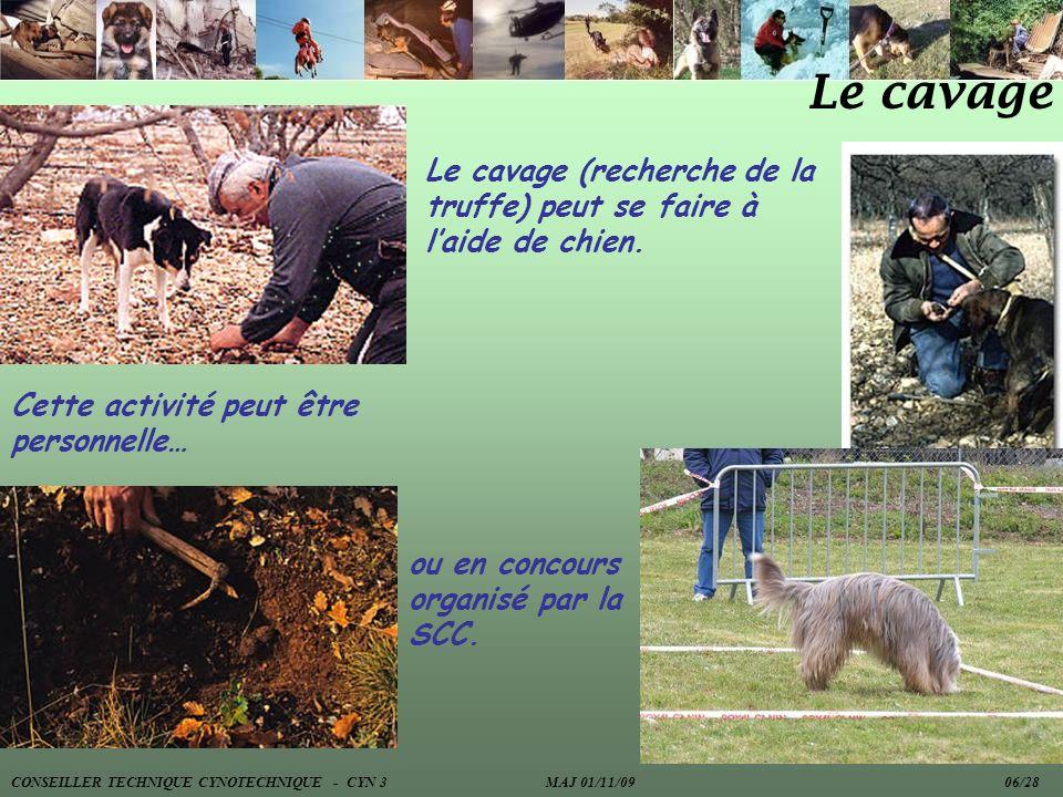 Le cavage Le cavage (recherche de la truffe) peut se faire à l'aide de chien. Cette activité peut être personnelle…