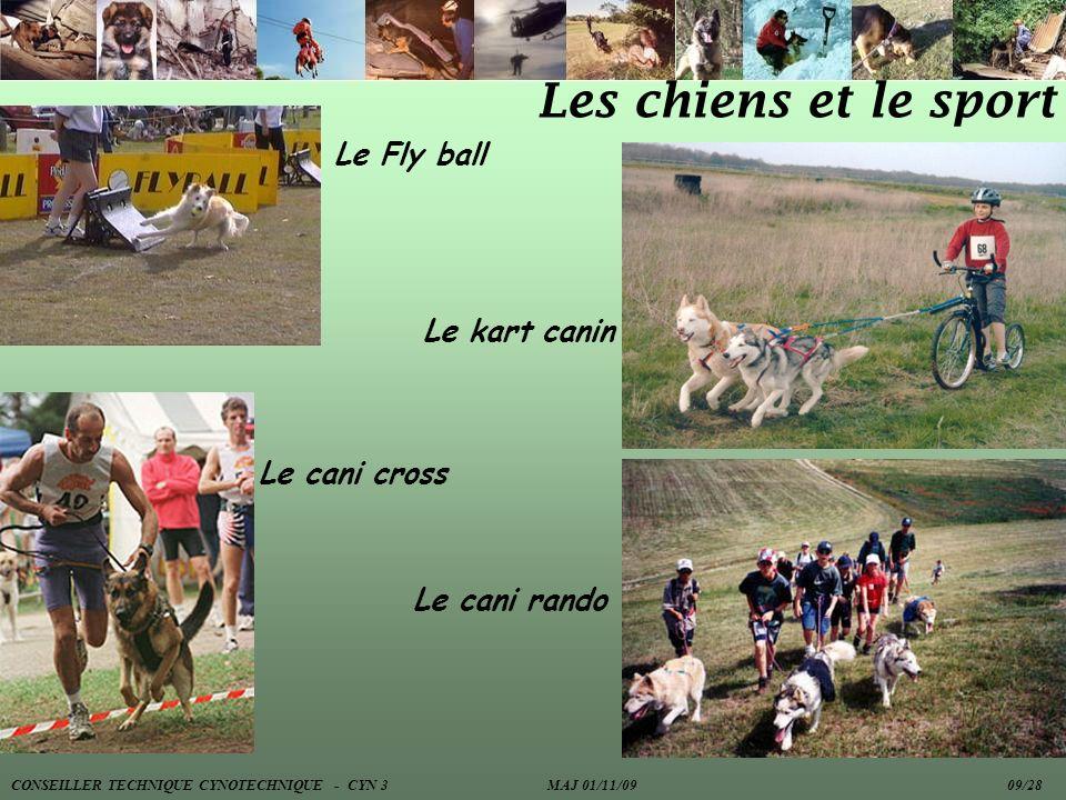 Les chiens et le sport Le Fly ball Le kart canin Le cani cross
