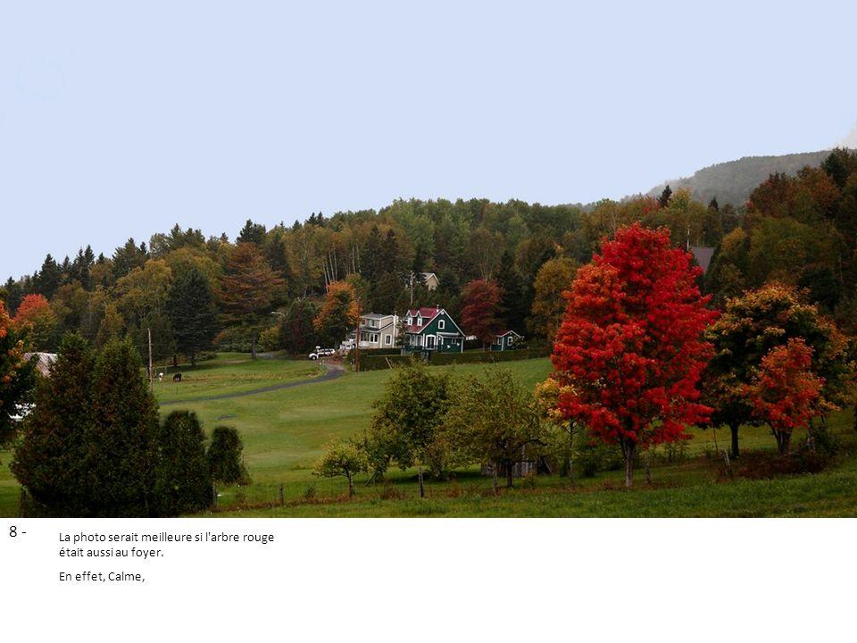 8 - La photo serait meilleure si l arbre rouge était aussi au foyer.