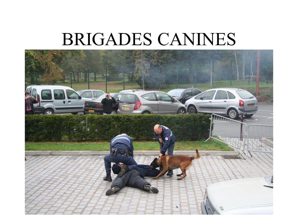 BRIGADES CANINES