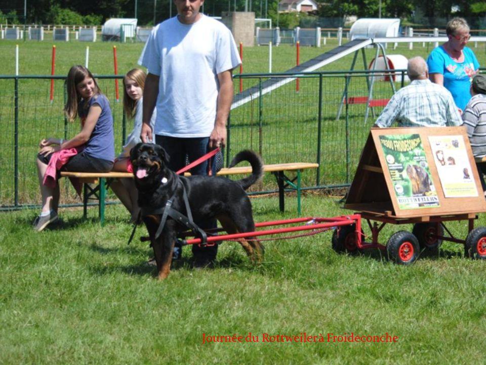 Journée du Rottweiler à Froideconche