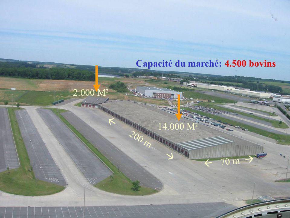 Capacité du marché: 4.500 bovins