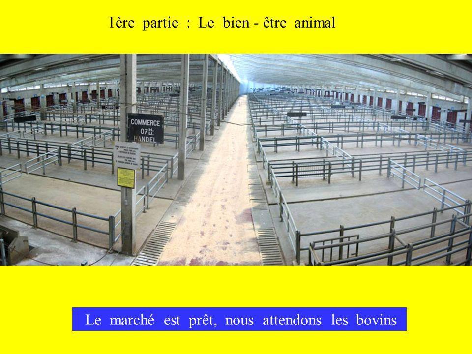 1ère partie : Le bien - être animal