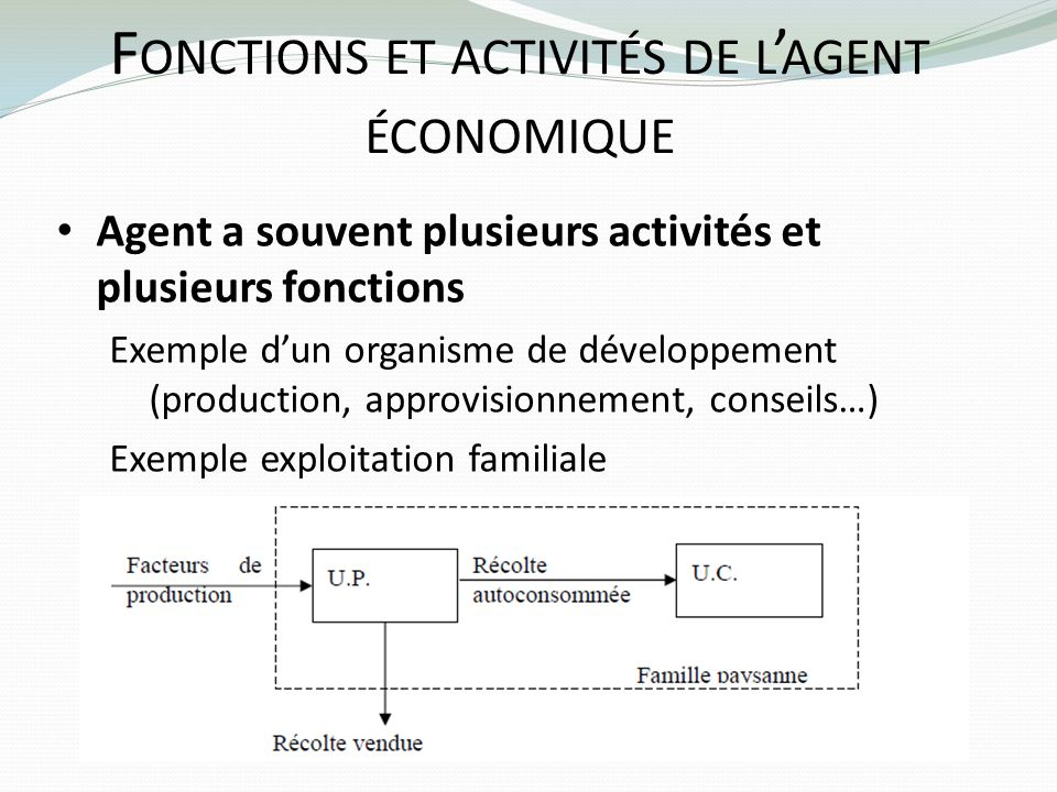 Fonctions et activités de l'agent économique