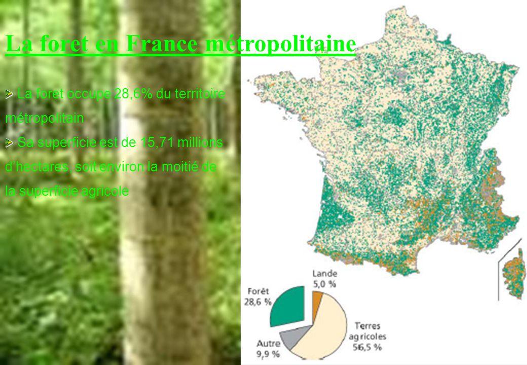 La foret en France métropolitaine