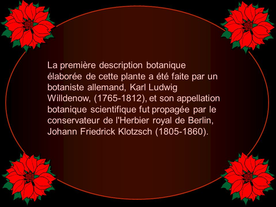 La première description botanique élaborée de cette plante a été faite par un botaniste allemand, Karl Ludwig Willdenow, (1765-1812), et son appellation botanique scientifique fut propagée par le conservateur de l Herbier royal de Berlin, Johann Friedrick Klotzsch (1805-1860).