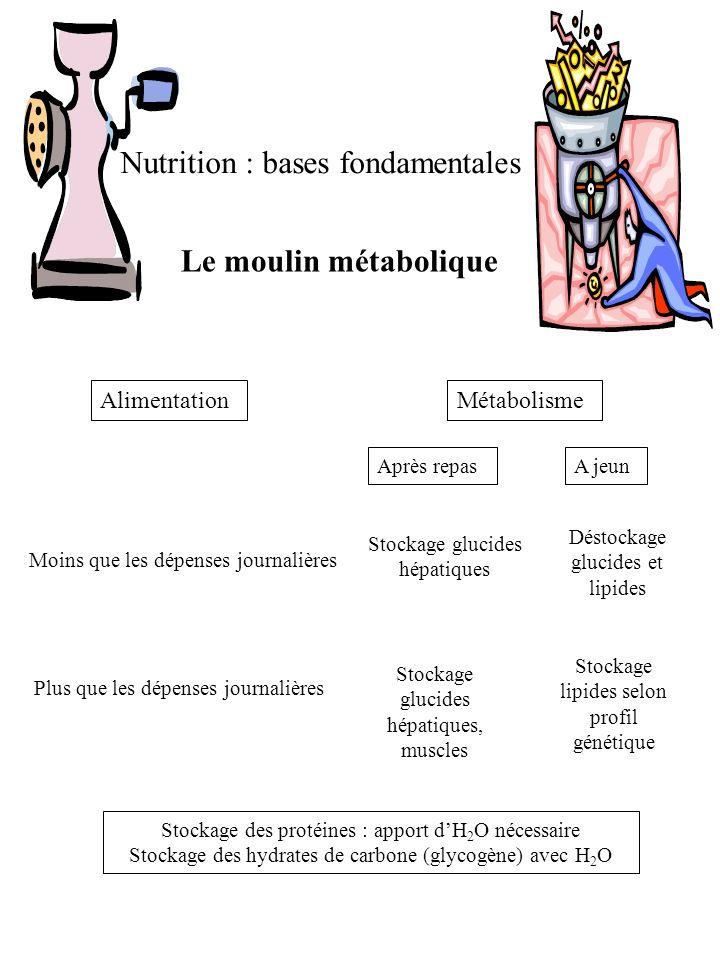 Nutrition : bases fondamentales