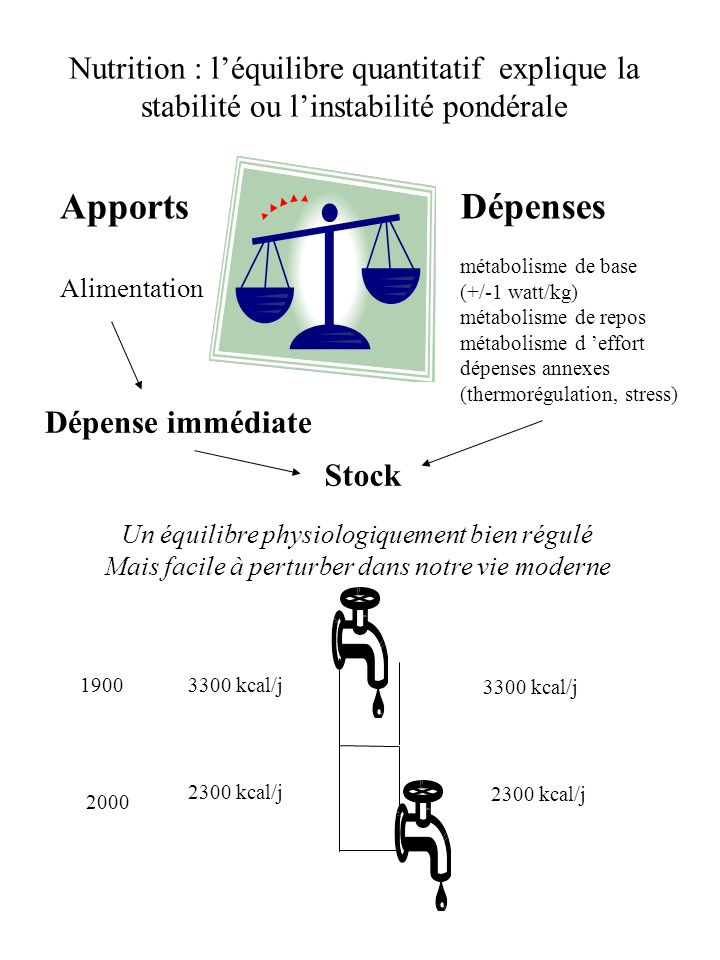 Nutrition : l'équilibre quantitatif explique la stabilité ou l'instabilité pondérale
