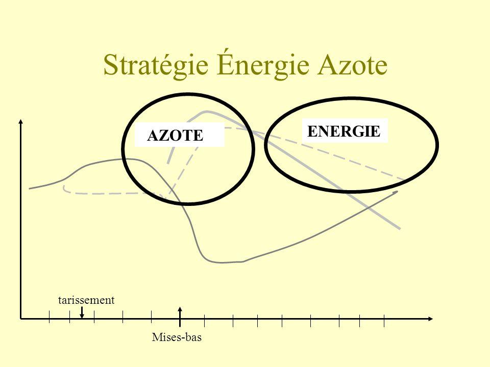 Stratégie Énergie Azote