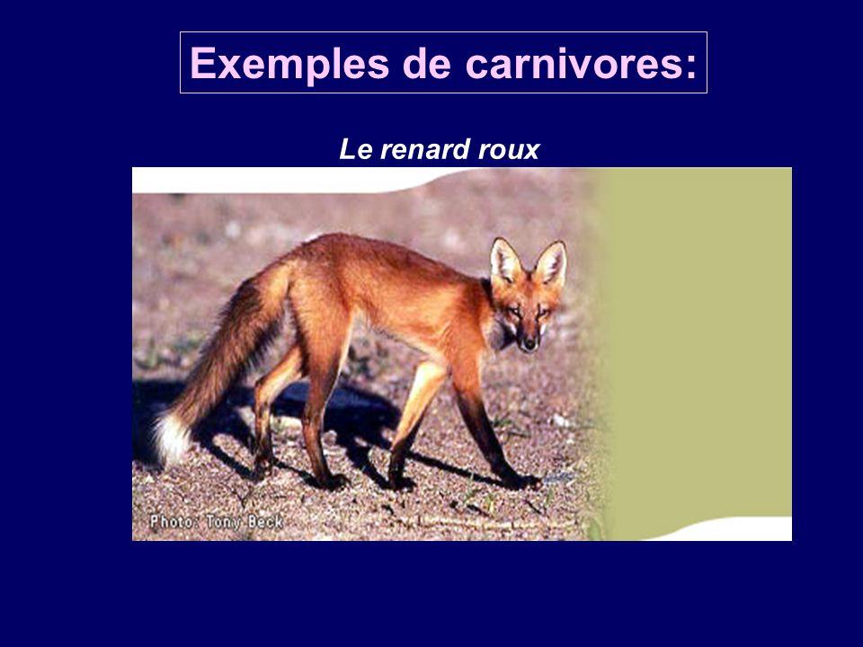 Exemples de carnivores:
