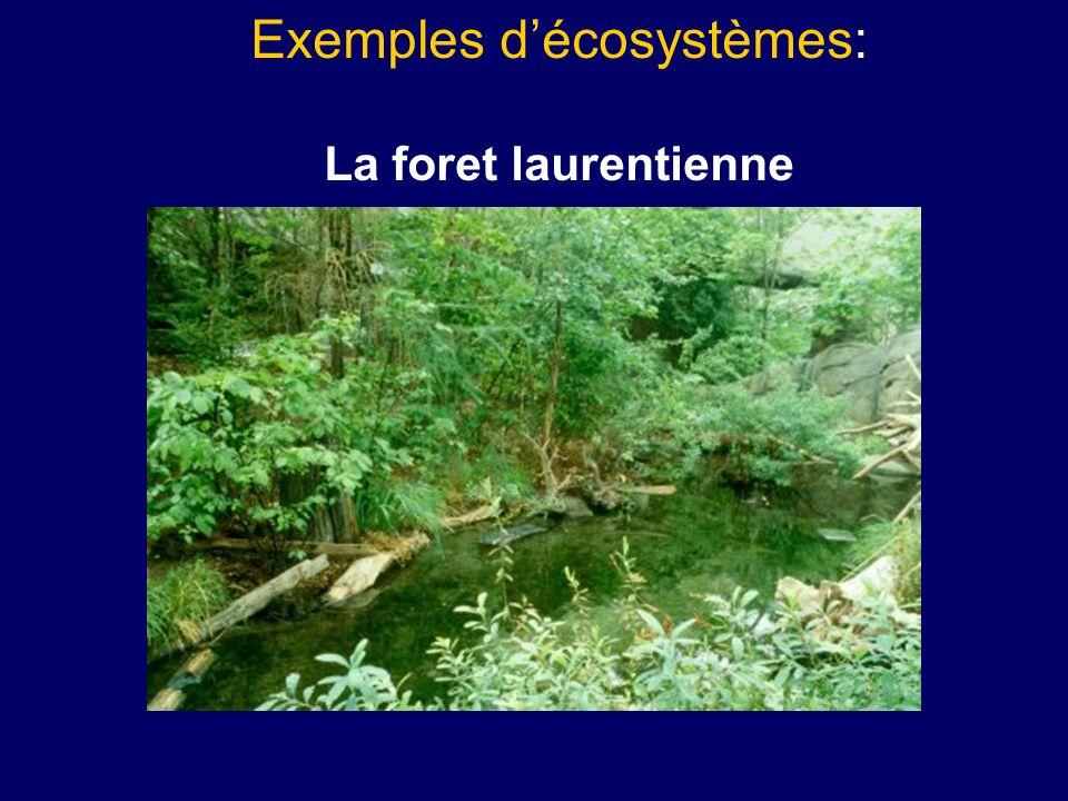 Exemples d'écosystèmes: