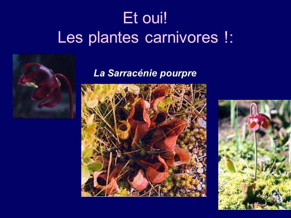 Et oui! Les plantes carnivores !: