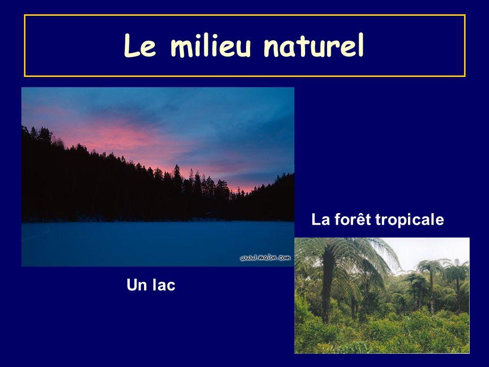 Le milieu naturel La forêt tropicale Un lac
