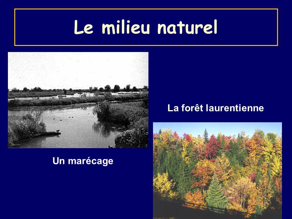 Le milieu naturel La forêt laurentienne Un marécage