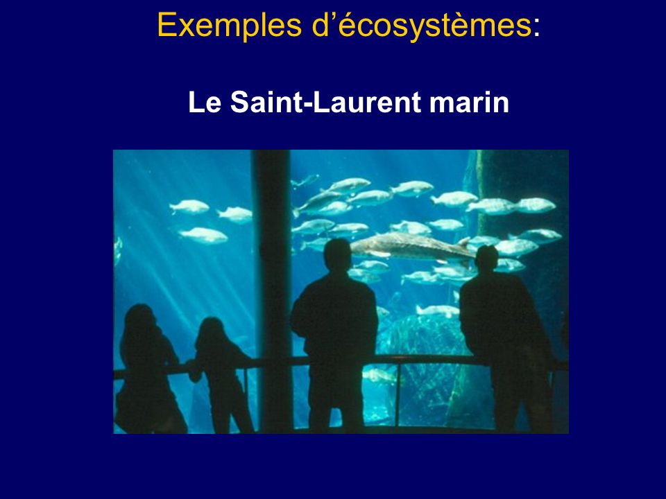 Le Saint-Laurent marin
