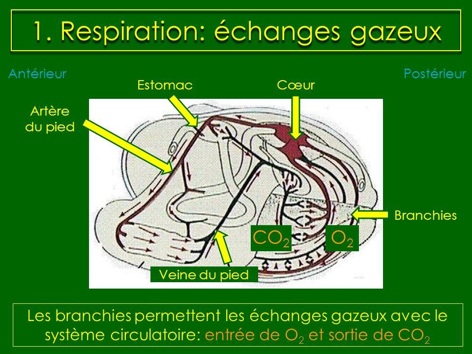 1. Respiration: échanges gazeux