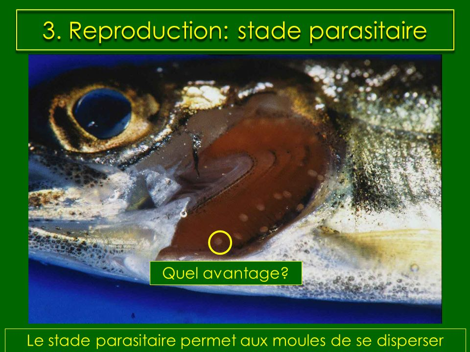 3. Reproduction: stade parasitaire