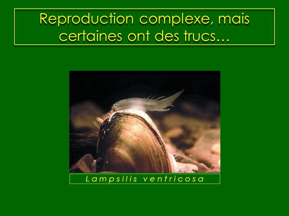 Reproduction complexe, mais certaines ont des trucs…