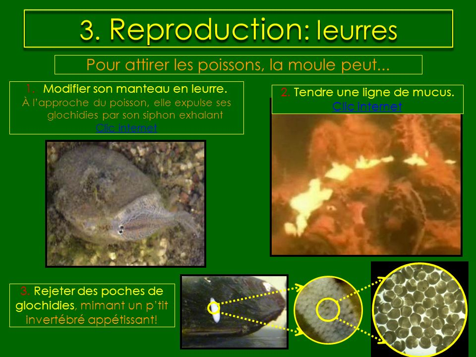 3. Reproduction: leurres