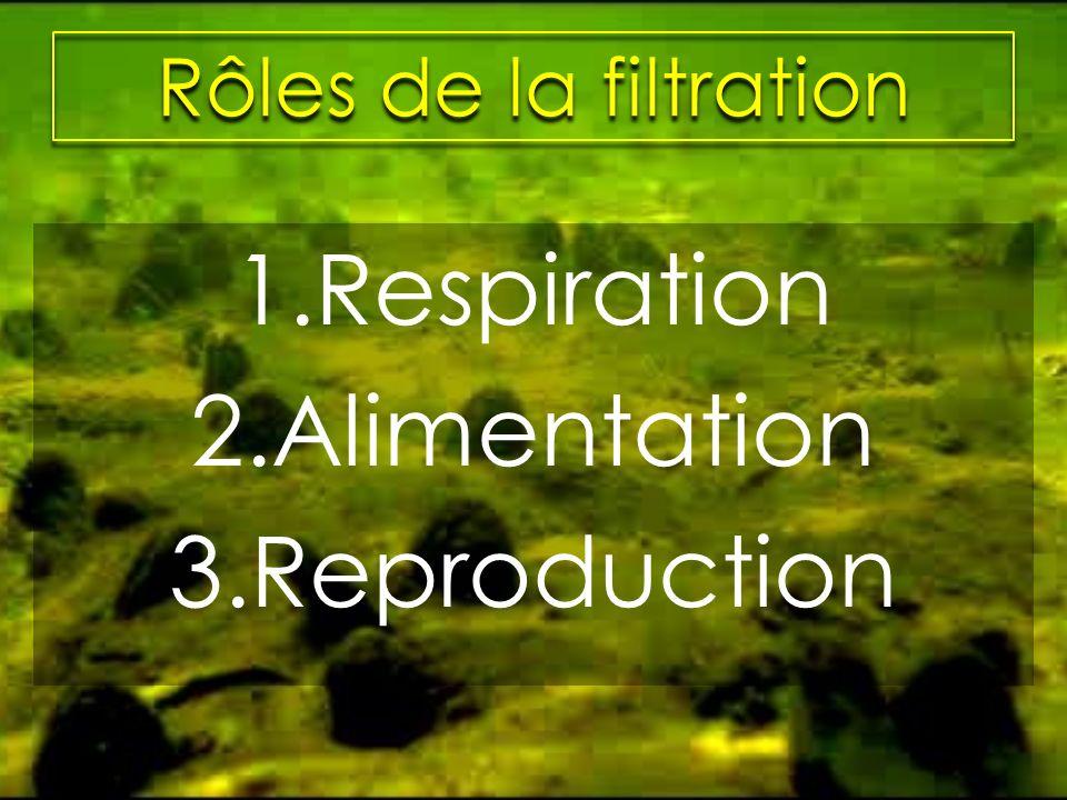 Rôles de la filtration Respiration Alimentation Reproduction