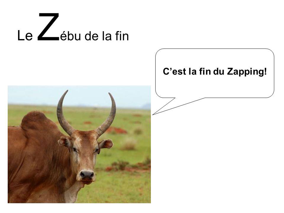 Le Zébu de la fin C'est la fin du Zapping!