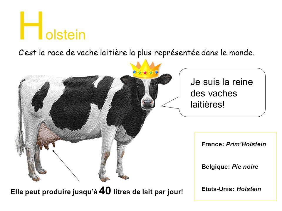 C'est la race de vache laitière la plus représentée dans le monde.