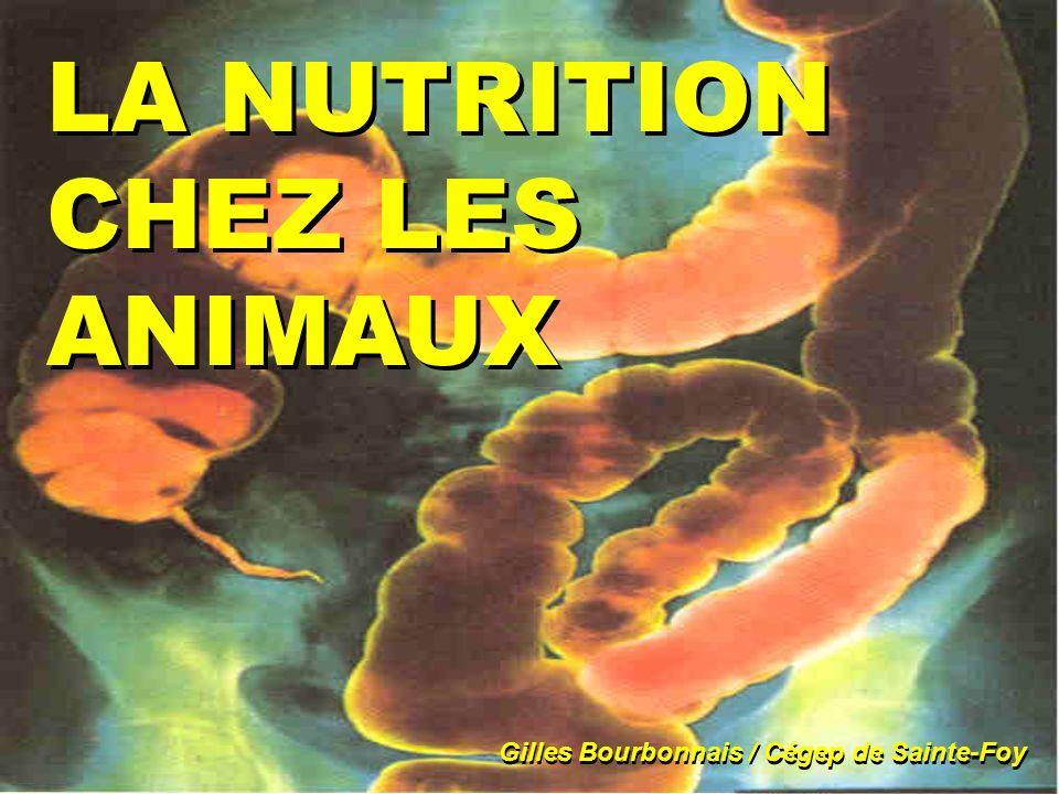 LA NUTRITION CHEZ LES ANIMAUX