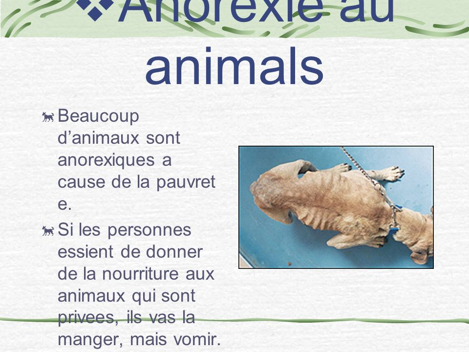 Anorexie au animals Beaucoup d'animaux sont anorexiques a cause de la pauvret e.