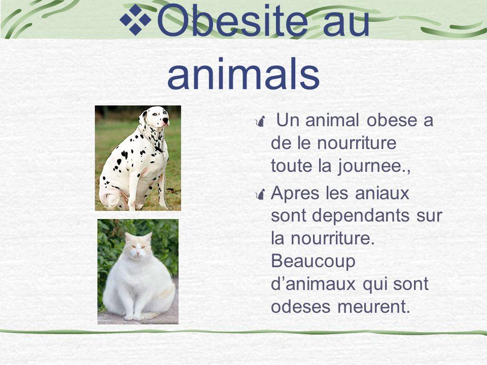 Obesite au animals Un animal obese a de le nourriture toute la journee.,