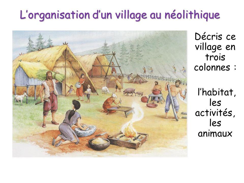 L'organisation d'un village au néolithique